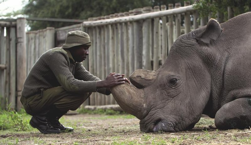 Image result for James Mwenda and Northern White Rhino