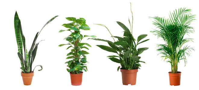 Plants that will improve the indoor air quality