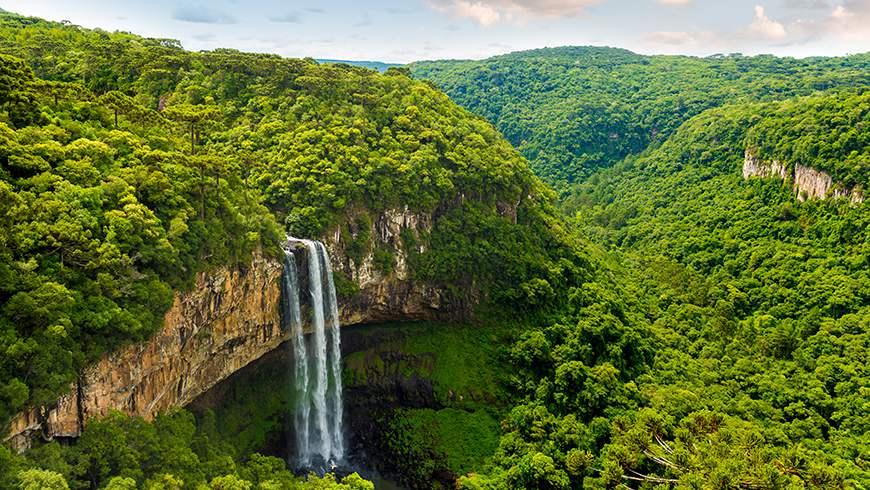 Image result for amazon biodiversity